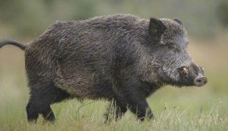 Vox propondrá en el Pleno de la Diputación una propuesta relativa al control de especies cinegéticas en zonas agrícolas