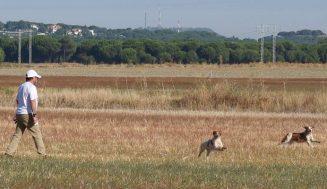 Mañana arranca la temporada general de caza bajo una nueva Ley